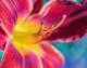 Makroaufnahme eines Blütenstängels